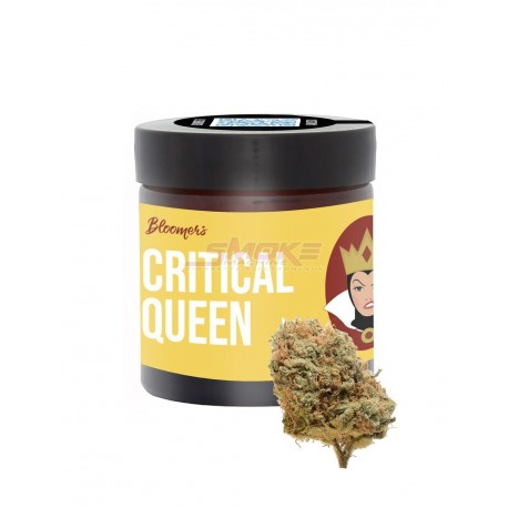 Critical Queen- Bloomers