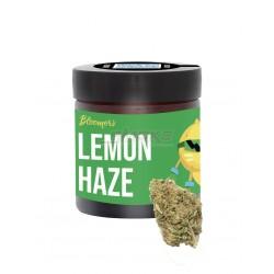 Lemon Kush - Bloomers CBD