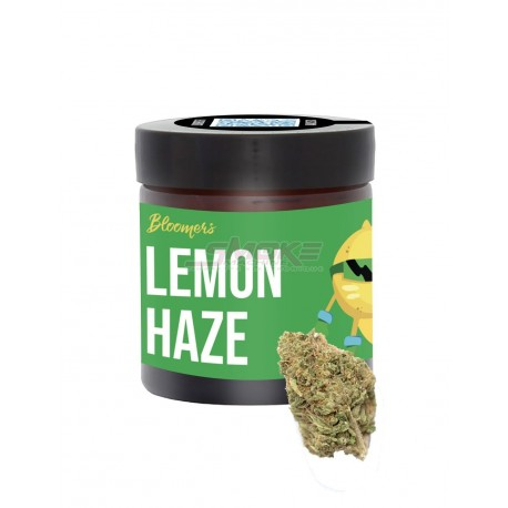 Lemon Kush - Bloomers
