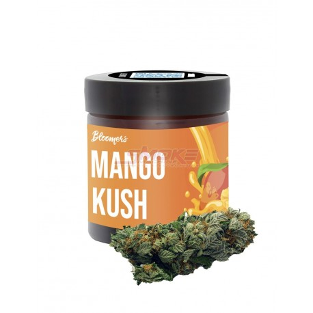Mango Kush - Bloomers