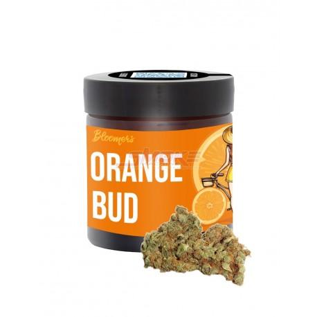 Orange Bud - Bloomers